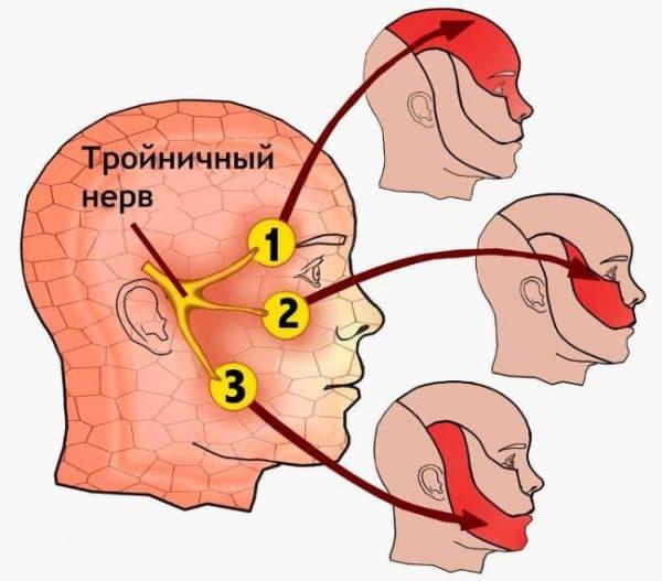 troynichny nerv